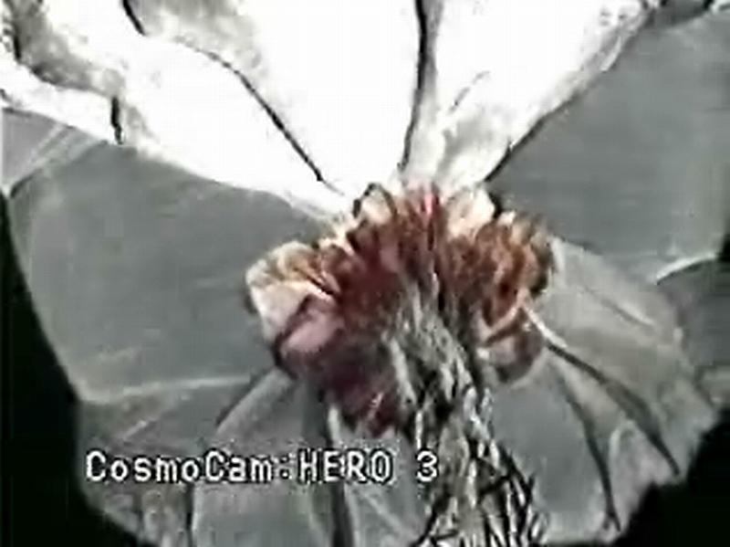 Image of the moment of the separation. The flower like pattern bellow the balloon is the opening parachute